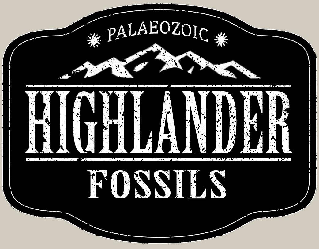 Highlander Fossils