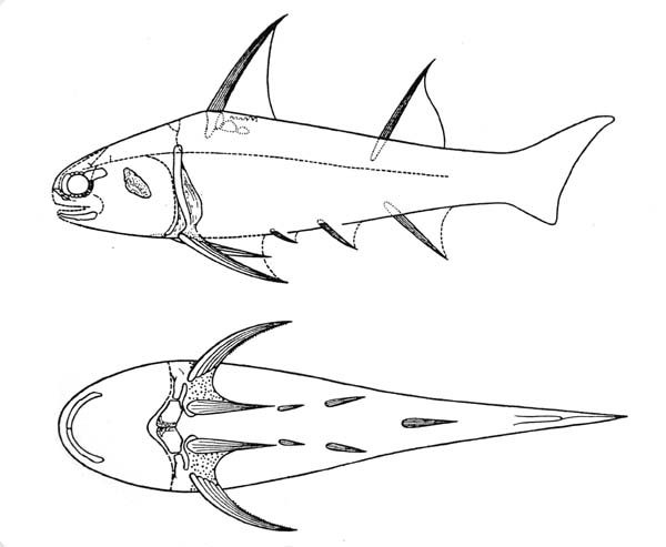 diplacanthus drawn